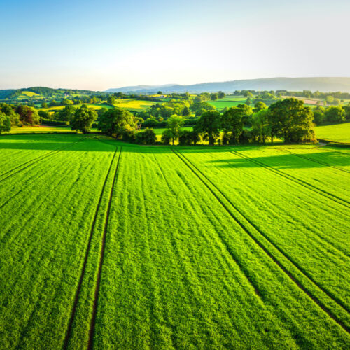 Lush green field and trees against a clear blue sky